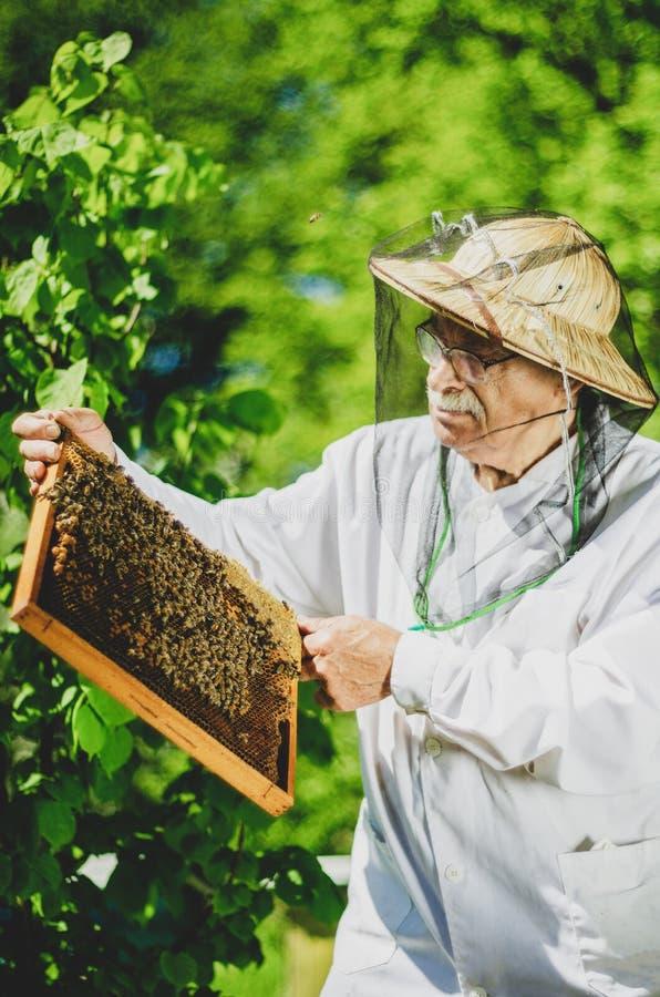Apiculteur supérieur procédant à l'inspection dans le rucher pendant le printemps photo stock