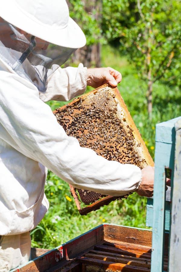 Apiculteur tenant le nid d'abeilles photos libres de droits