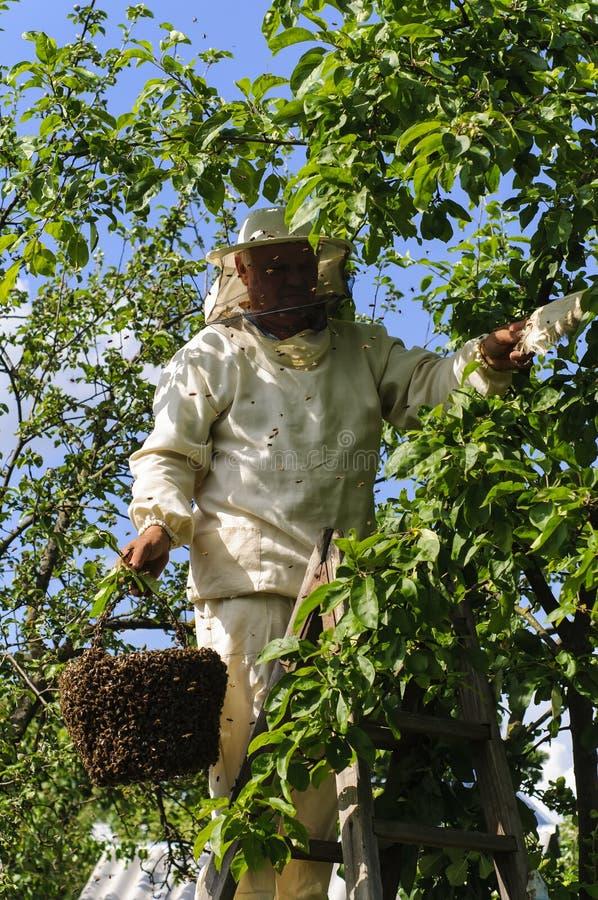 Apiculteur tenant un essaim d'abeille photographie stock