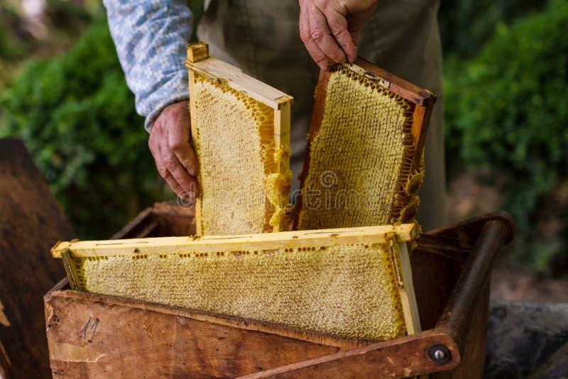 Apiculteur travaillant à la ruche d'abeille photos stock