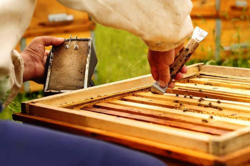 Apiculteur travaillant avec des abeilles utilisant des actions de l'apiculture photo stock