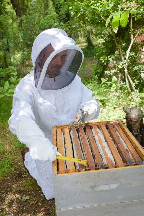 Apiculteur vérifiant le cadre de miel photos stock