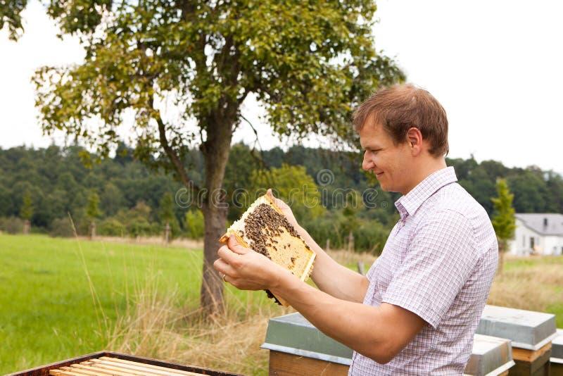 Apiculteur vérifiant un nid d'abeilles photo stock