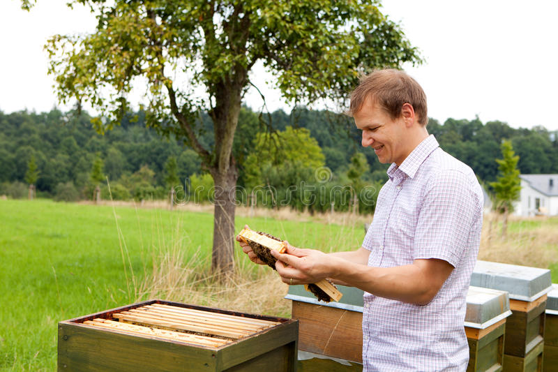 Apiculteur vérifiant un nid d'abeilles photographie stock