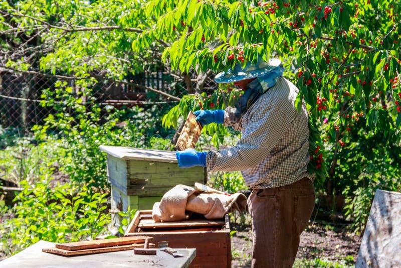 Apiculteur v?rifiant une ruche pour assurer la sant? de la colonie d'abeille ou rassemblant le miel photos libres de droits