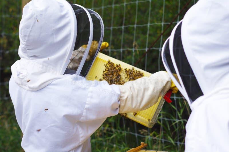 Apiculteurs avec la ruche photographie stock