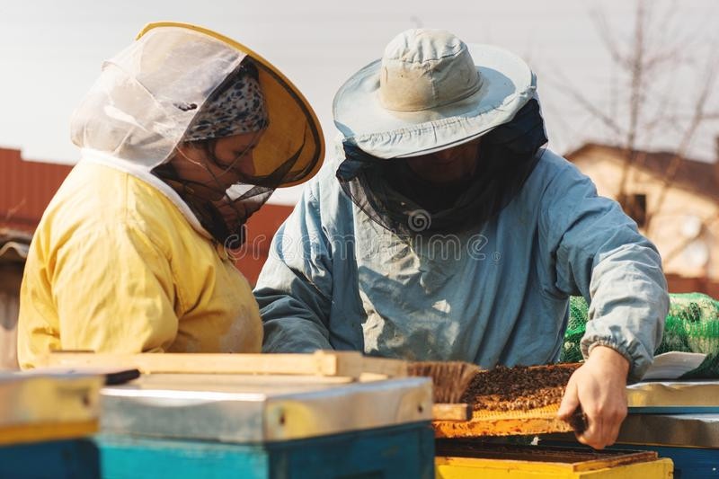 Apicultor da família Apicultor Inspecting Bee Hive ap?s o inverno imagem de stock