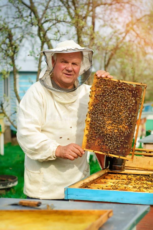 Apicultor que sostiene un panal lleno de abejas Apicultor en el workwear protector que examina el marco del panal en el colmenar  fotografía de archivo