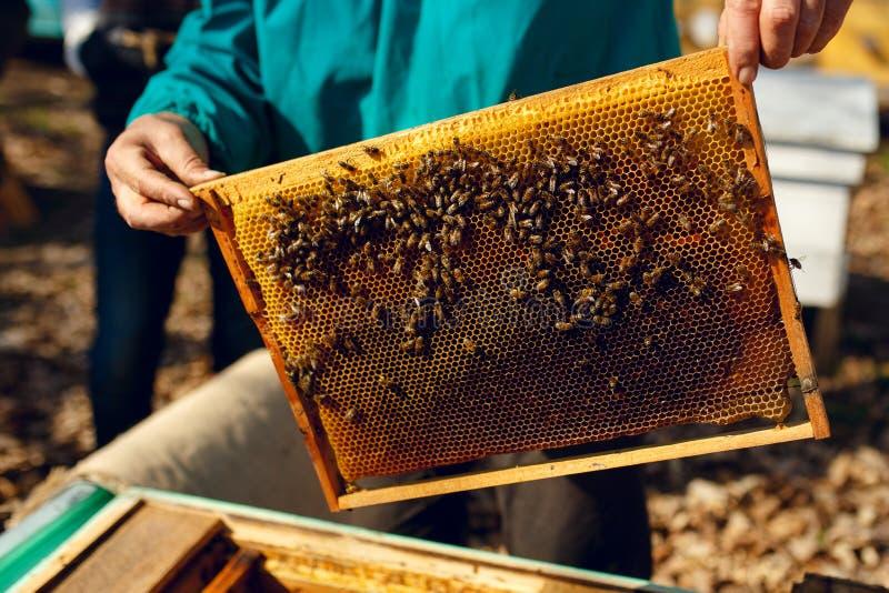 Apicultor que trabalha para recolher fora o mel Vista horizontal imagem de stock