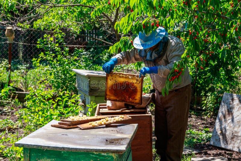 Apicultor que verifica uma colmeia para assegurar a sa?de da col?nia da abelha ou que recolhe o mel foto de stock