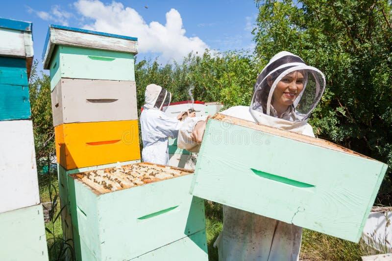 Apicultor Working With Colleague no apiário fotografia de stock