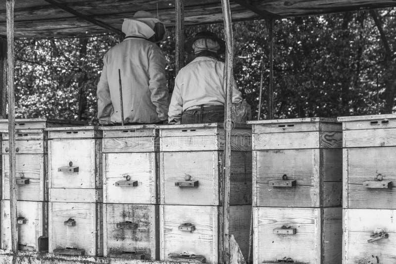 Apicultores de sexo masculino y de sexo femenino que trabajan con las abejas y las colmenas imagenes de archivo