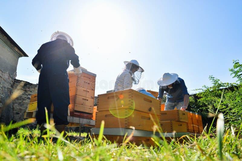 Apicultores que trabajan con las colmenas en el colmenar foto de archivo