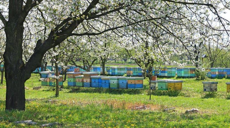 Apicultura, abejas y colmenas fotos de archivo