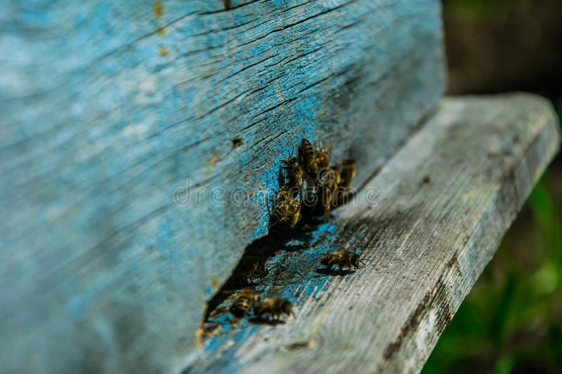 Apiculture stock photography