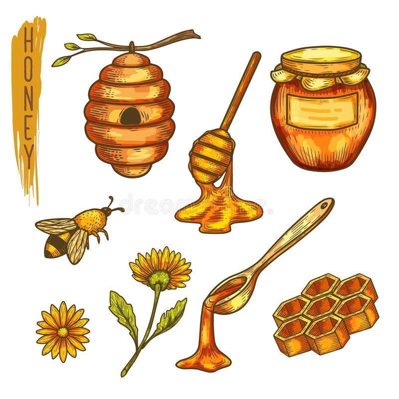 Free Apiculture Honey And Bee, Honeycomb And Hive,spoon Stock Photography - 143887192