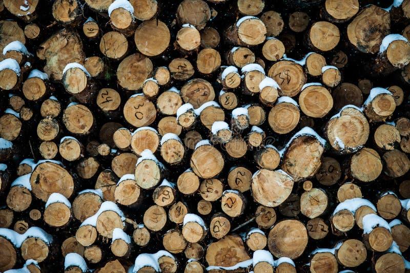 Apilado exactamente abre una sesión el bosque del invierno fotografía de archivo libre de regalías