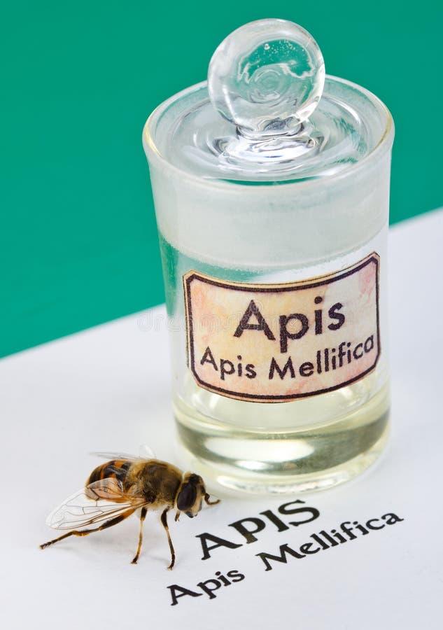 apis蜂解压缩mellifica毒物页 库存照片