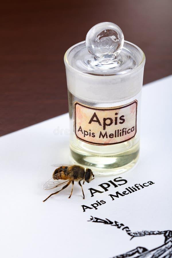 apis蜂解压缩mellifica毒物页 免版税库存照片