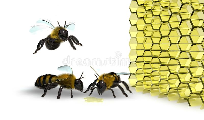 Bee in flight on white background towards honey. Apis mellifera, widespread in all continents excluding Arctic and Antarctic areas, is the only one known in stock illustration