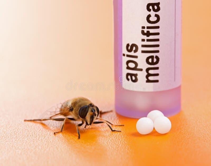 Apis Mellifica同种疗法治疗和蜂 免版税图库摄影
