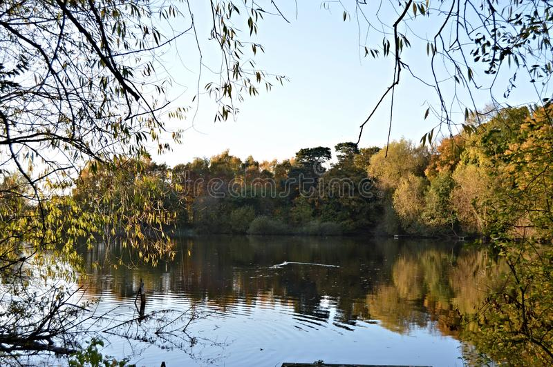 Apley Woods Lake. Picture taken in Apley Woods Shropshire UK. This is Apley Lake stock image