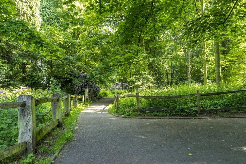 Apley Woods. Is situated just outside the market town of Wellington in Telford Shropshire stock images