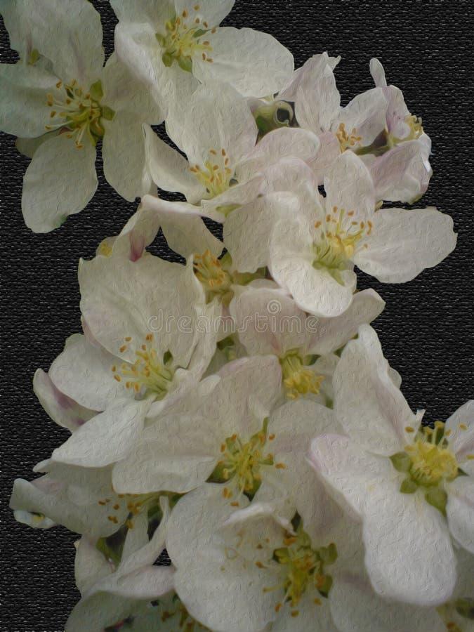 Aplle kwiaty obraz stock