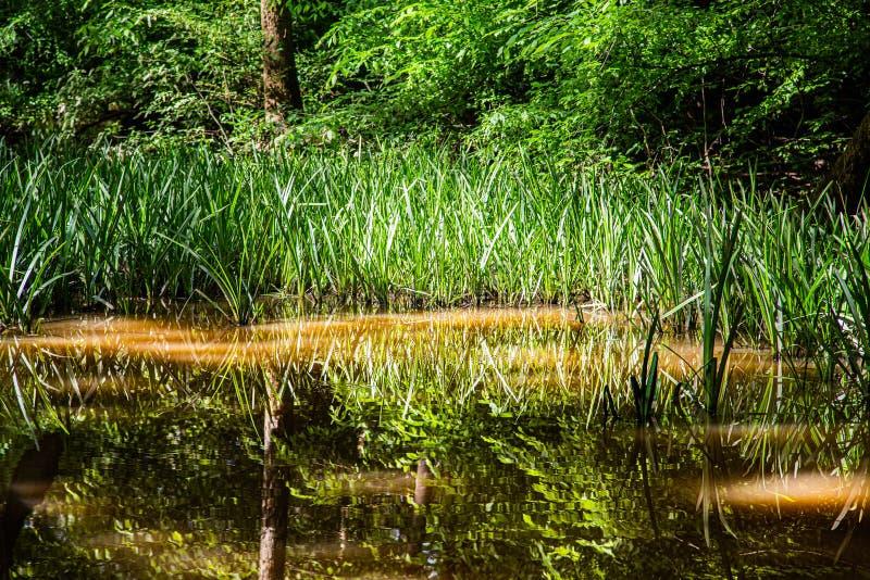 Apogeo en bosque de la primavera imágenes de archivo libres de regalías
