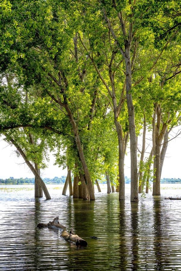 Apogeo en el lago Lowell Idaho y la reflexión inundada de los árboles fotografía de archivo libre de regalías