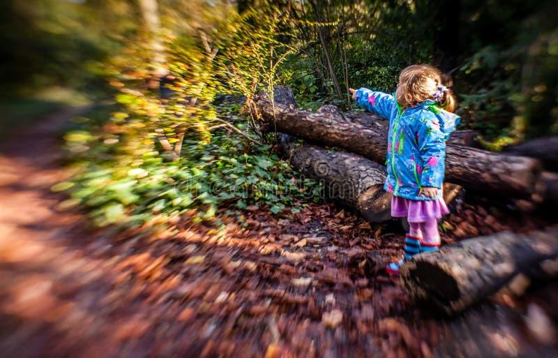 Apontando a maneira em uma floresta foto de stock royalty free
