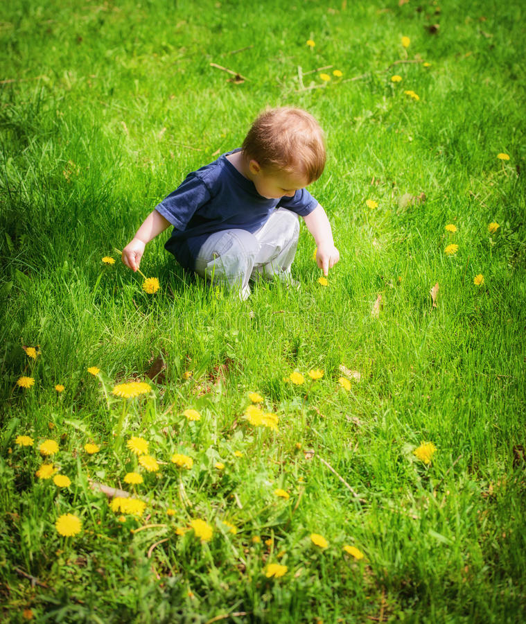 Apontar exterior do menino novo a uma flor do dente-de-leão fotos de stock