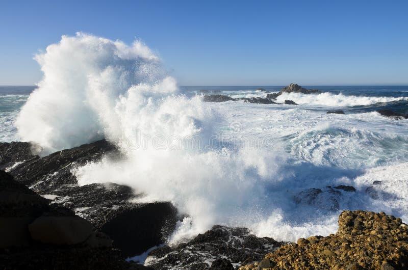 Aponte o parque de estado de Lobos, Monterey, Califórnia imagem de stock