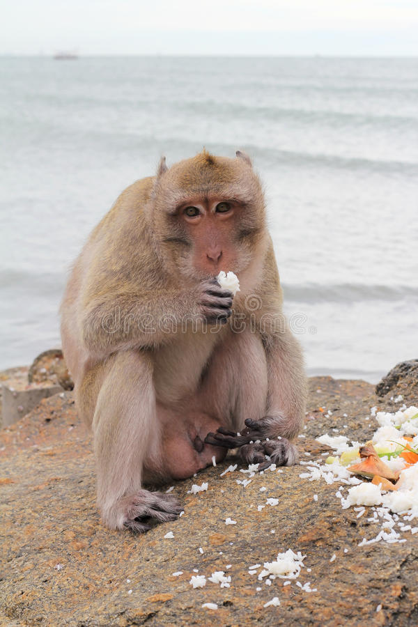 Apor i natur arkivfoto