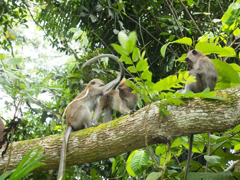 Apor som spelar i skogen royaltyfri bild