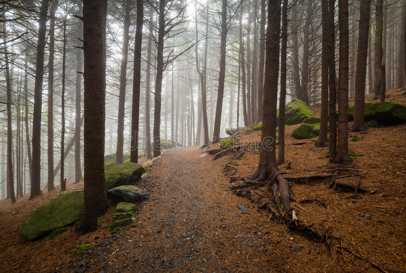 Appalachian śladu Pólnocna Karolina Outdoors deresza Lasowy Wycieczkuje Mou obrazy stock