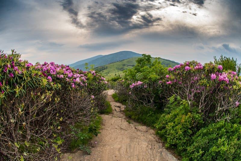 Appalachian Sleep daalt Jane Bald Through Rhododendron stock foto's