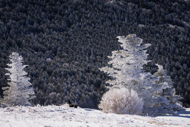 Appalachian slingavandring 2 för vinter royaltyfria foton