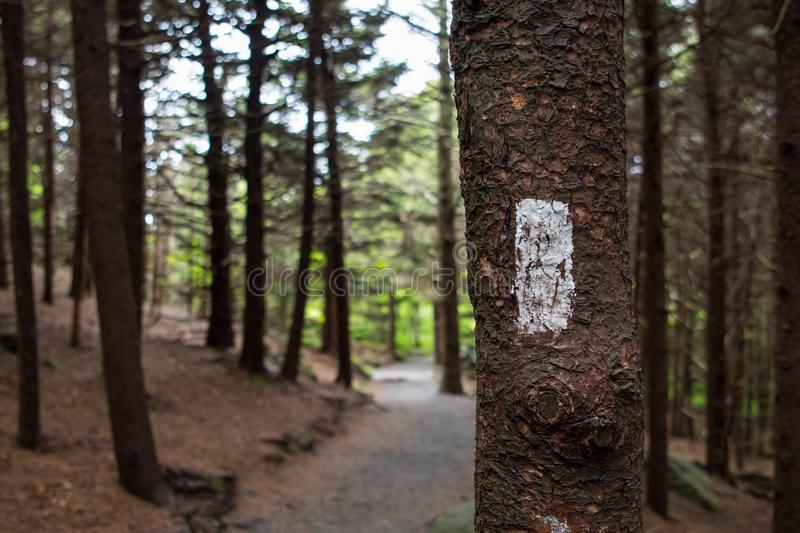 Appalachian Trail Blaze at Carvers Gap. In pine forest royalty free stock photography