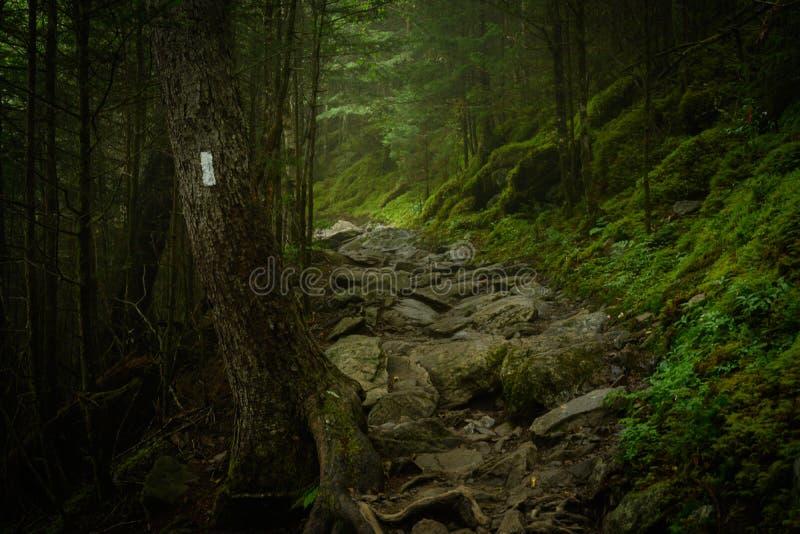 Appalachian Trail Blaze i Foggy Forest arkivfoto