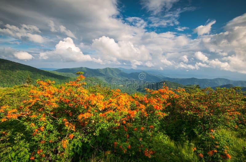 Appalachian Trail Flame Azalea Flowers Spring Mountains Scenic Landscape Photography stock image