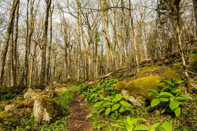 Appalachian Trail on Mount Rogers mountain in Virginia. Appalachian Trail leading to the Spruce-fir forest on Mount Rogers in Virginia royalty free stock image