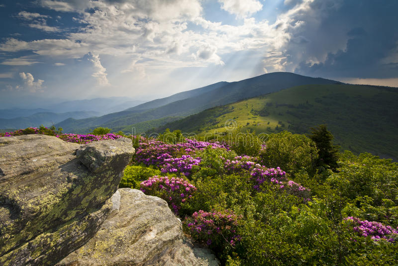 Appalachian Trail Roan Mountain Rhododendron Bloom. On Blue Ridge Peaks scenic landscape photography stock images
