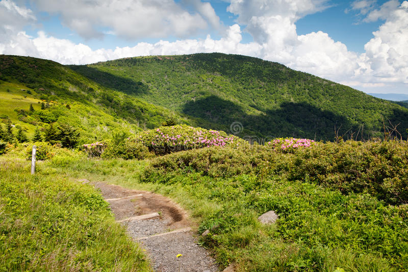 Appalachian Trail Roan Mountain TN and NC. The Appalachian Trail heading toward Jane Bald on Roan Mountain along the border of North Carolina and Tennessee royalty free stock photo