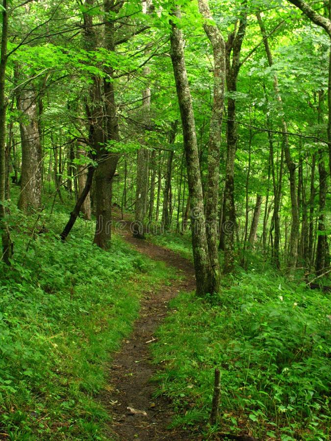 Appalachian Trail--Tennessee. Beautiful section of the Appalachian Trail between the Nolichucky River and Unaka Mountain royalty free stock photography