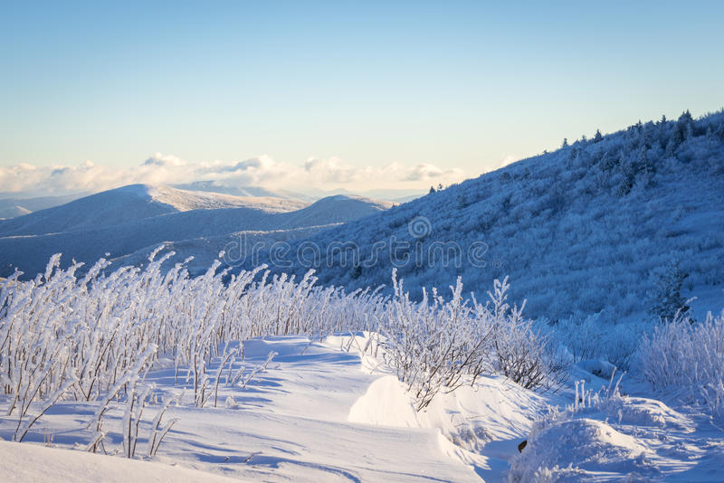 Appalachian Trail Winter Hike. A Frasier fir tree grows naturally along the Appalachian Trail at the Roan Highlands of the Blue Ridge Mountains on the border of royalty free stock images
