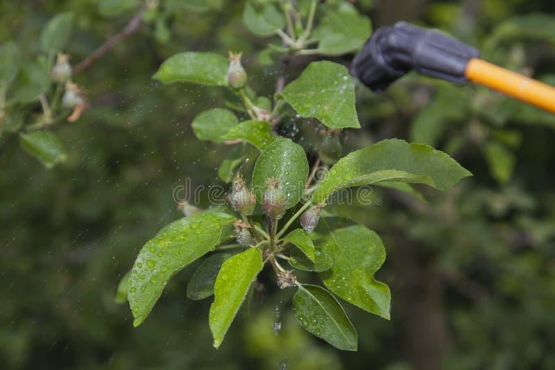Apparat för att bespruta bekämpningsmedlet i trädgården royaltyfri fotografi