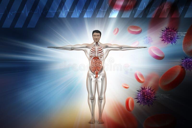 Apparato digerente umano con, globuli e virus illustrazione di stock