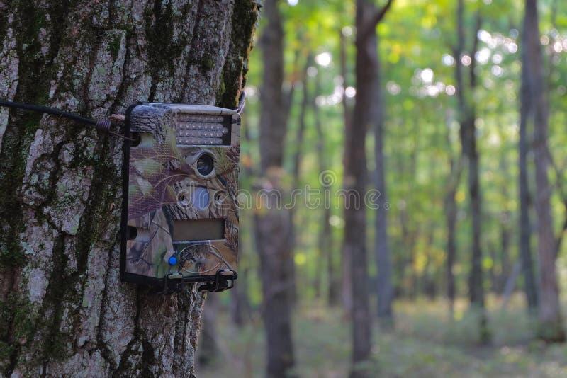 Appareil-photo de jeu monté sur l'arbre images libres de droits
