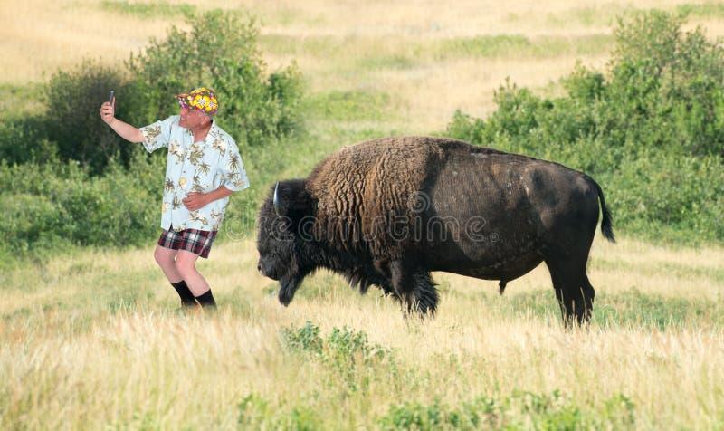 Appareil-photo de touristes Selfie, Buffalo de voyage drôle images stock
